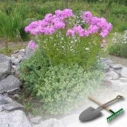 Как оформить цветочные клумбы на даче