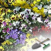 цветочные клумбы на даче