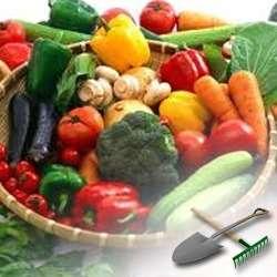 Как выращивать овощи в домашних условиях?