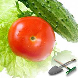 выращивание овощей в домашних условиях