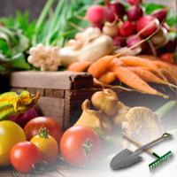 выращивание овощей на даче