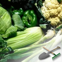 выращивание овощей в подвале