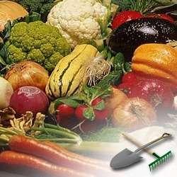 Несколько слов про выращивание овощей в открытом грунте