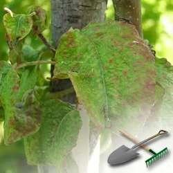 Что следует знать про вредителей сада и огорода?