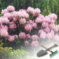 цветущие кустарники для дачи