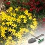 Правила высадки многолетних цветов на даче