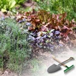 Как выращивать пряные травы на даче?