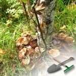 Увлекательное выращивание грибов дома