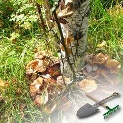 Увлекательное выращивание грибов на даче