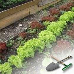 Обычное выращивание рассады овощей