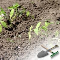 выращивание рассады овощей