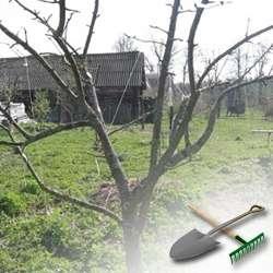 Как и когда обрезать яблони?