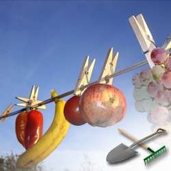 Сушка овощей и фруктов в домашних условиях