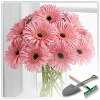 Герберы: невероятно красивые и неприхотливые цветы