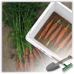 как правильно хранить морковь