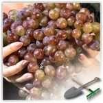 Несколько секретов о том, как хранить виноград