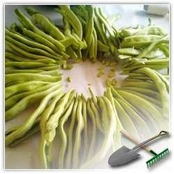 Как выращивать и как хранить фасоль без потерь