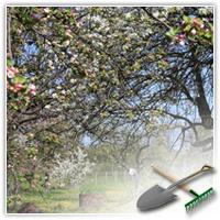 контроль роста деревьев