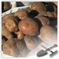 Надежное хранение картофеля
