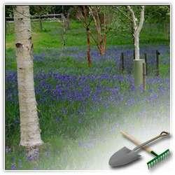 Что такое задернение и как оно улучшает почву в саду