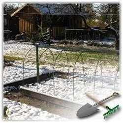 Овощи под зиму: что и как высаживать