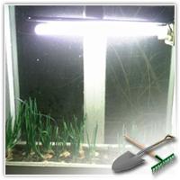как посадить лук на подоконнике