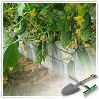 Как повысить урожайность огурцов? Делаем тёплые грядки