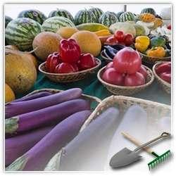 Основные проблемы овощеводства