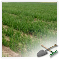 проблемы овощеводства