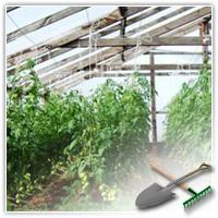 опыление томатов в теплице