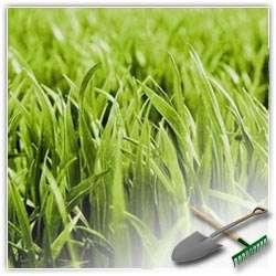 Как правильно выбирать газонную траву?