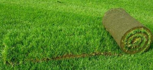 Газонная трава как выбрать