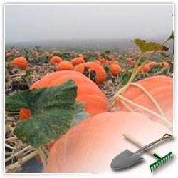 Обязательные работы на огороде осенью