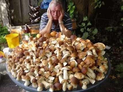 Выращивание грибов на даче: способы, особенности и нюансы