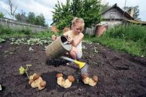 выращивание грибов на даче и в огороде