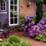 Выращивание гортензии на даче: высадка, обрезка, полив, организация клумб