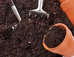 грунт для рассады огурцов в домашних условиях