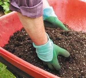 огурцы на рассаду для открытого грунта