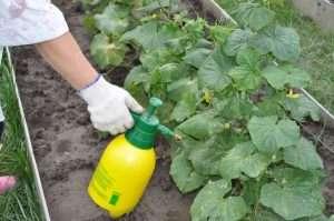 как часто поливать рассаду огурцов