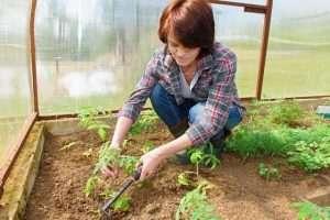 когда сажать рассаду огурцов для теплицы