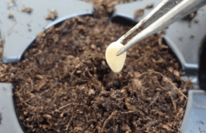 когда сажать семена огурцов на рассаду
