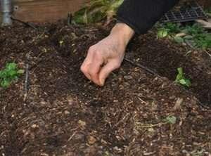 уход за рассадой огурцов