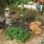 Выращивание опят на даче: как получить большой урожай?