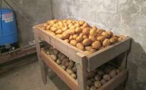 хранение картофеля в подвале